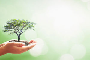 Accountant champions digital transformation for holistic therapy charity